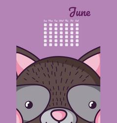 cute raccoon calendar cartoon vector image