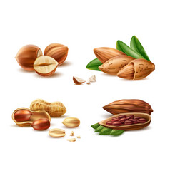 realistic hazelnut peanut almond cocoa bean vector image