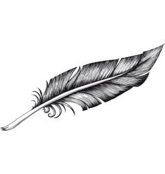 quill pen vector image