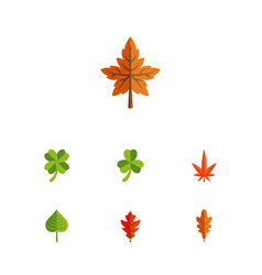 Flat icon leaves set of leaf frond linden and vector