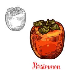 Persimmon fruit sketch exotic asian berry vector