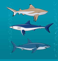 Common sharks set vector