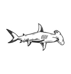 great hammerhead shark engraving vector image