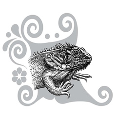 Iguana drawing vector image vector image