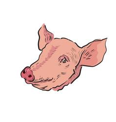 color sketch pig vector image