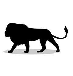 lion predator black silhouette animal vector image vector image