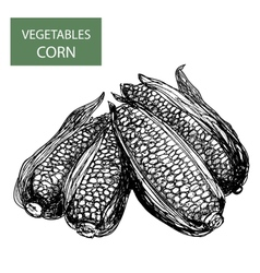 Corn-set of vector image