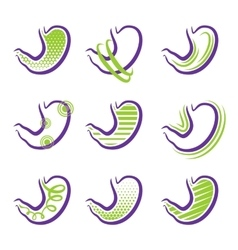 All about stomach vector