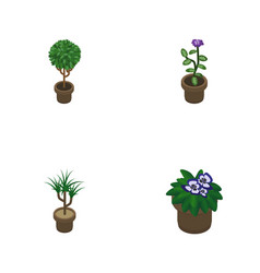 Isometric houseplant set of tree flowerpot vector
