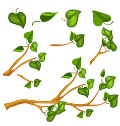 Green leaves on branch object vector