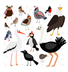 Birds collection isolated on white background vector