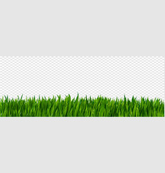 bright green realistic grass border isolated on vector image