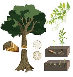 Plant eco 01 vector