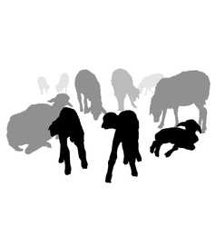 Sheep Family vector image
