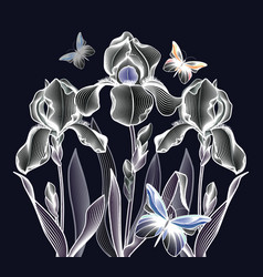 Three delicate contoured irises with butterflies vector