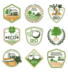 colorful organic eco emblems collection vector image