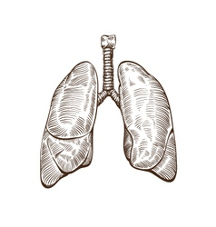 Hand drawn lungs isolated on a white backgrounds vector image vector image