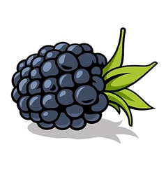 Blackberry 001 vector