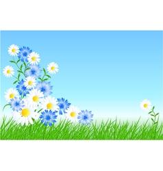 cornflowers camomiles vector image