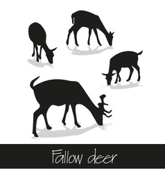 Feeding fallow deer silhouette of animal icons vector