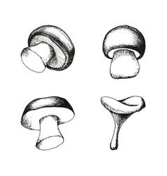 Hand drawn mushrooms set vector
