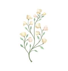 Long stalk with pale flowers vector