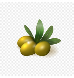 Realistic green olives with leaves isolated vector