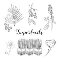wheatgrass acai and goji berries flax seed and vector image