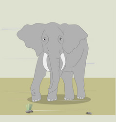 big gray elephant stands on nature vector image