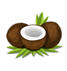 pieces of coconut with leaves isolated on white vector image