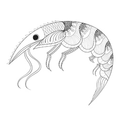 Hand drawn zentangle Shrimp for adult anti stress vector image vector image