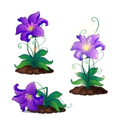 Bright purple magic flowers grows in ground vector