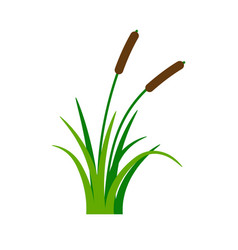Bush bulrush with green grass vector