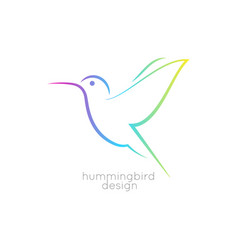 hummingbird logo design colibri bird icon on vector image