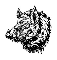 vintage wild boar head with tusks vector image