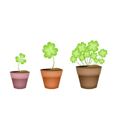 Four Leaf Clovers in Three Ceramic Pots vector