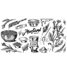 Mustard seeds and plant set spicy condiment vector