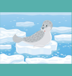 Seal on an ice floe vector