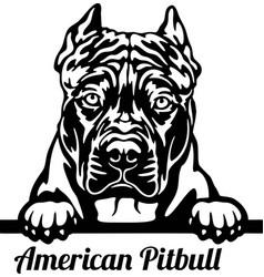 american pitbull peeking dog - head isolated vector image