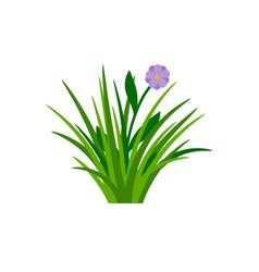 Bush green grass with flower vector