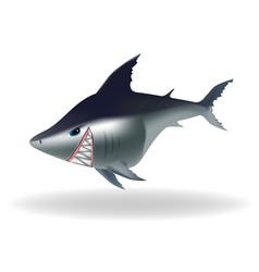 dangerous looking cartoon shark vector image
