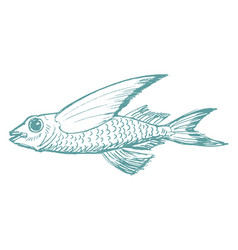 flying fish side view vector image