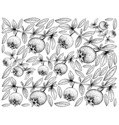 Hand drawn background of fresh chilean guava fruit vector