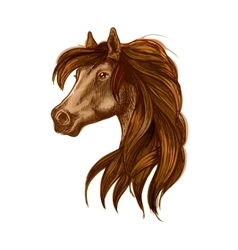 Horse head with long wavy mane vector image