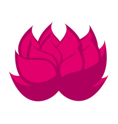 isolated lotus flower icon vector image
