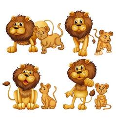 Lion set vector