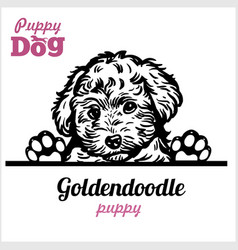 Puppy goldendoodle - peeking dogs - breed face vector