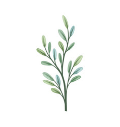 Thin stalk with oval leaves vector
