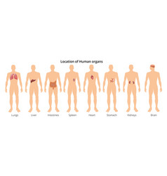 8 human body organ systems realistic educative vector