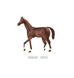 Arabian horse hand drawing sketch vector